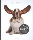 A jól nevelt kutya /Gyakorlatok a viselkedési problémák megoldására