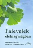 Falevelek életnagyságban /64 lombhullató és örökzöld faj bemutatása