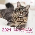 Macskák falinaptár 2021