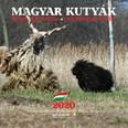 Magyar Kutyák naptár 2020 22x22 cm