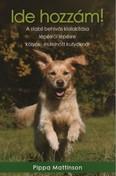 Ide hozzám! - A stabil behívás kialakítása lépésről lépésre kölyök- és felnőtt kutyáknál